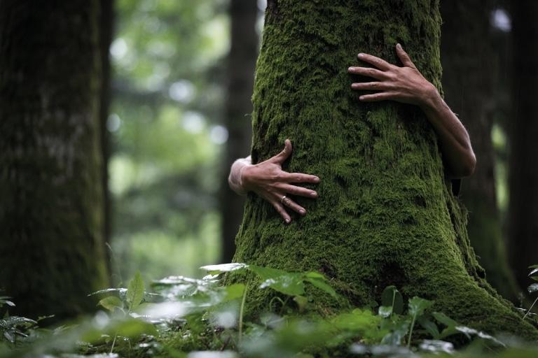 Waldbade inmitten der Natur