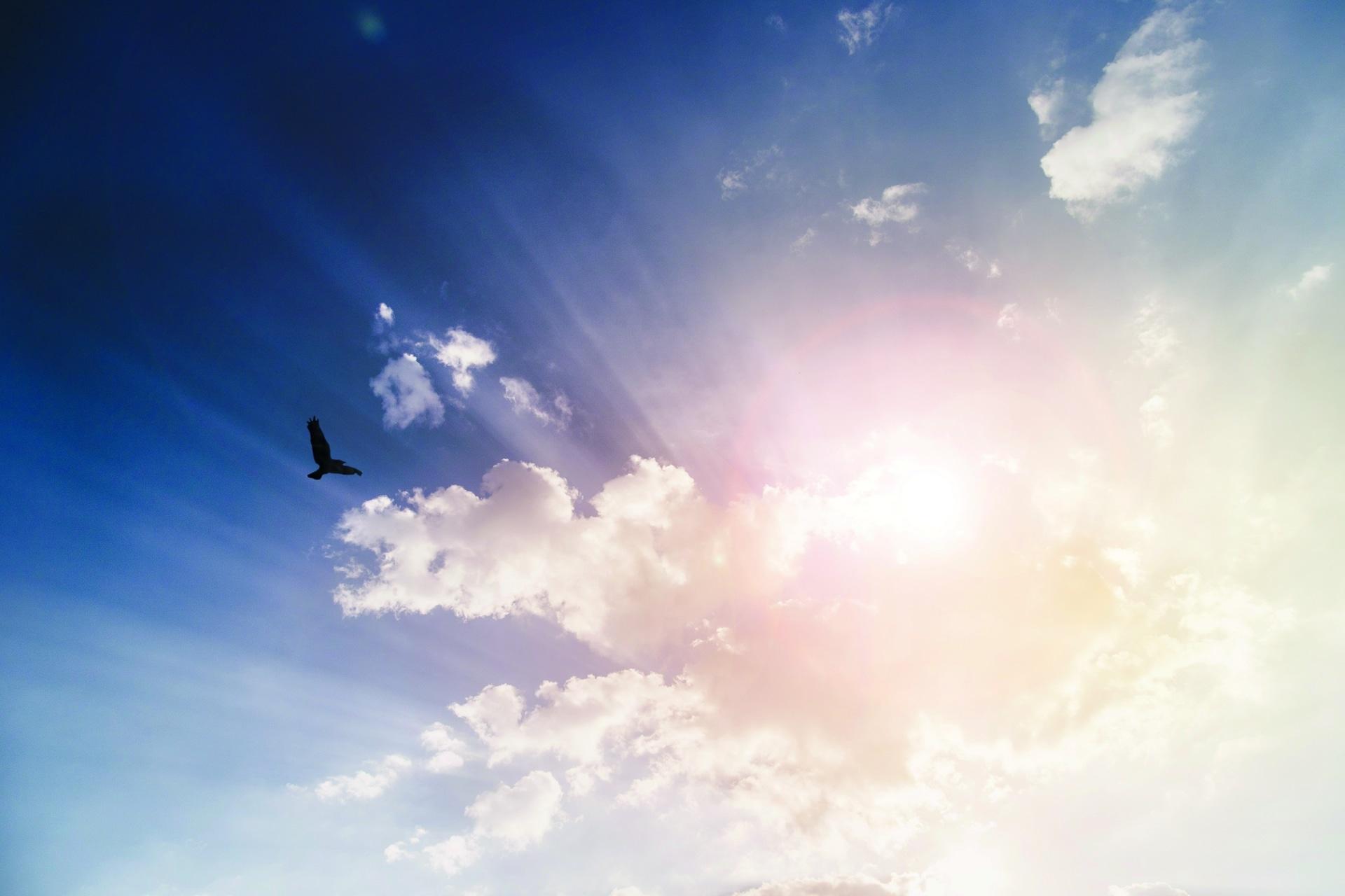 Himmel mit Sonnenstrahlen und einem Vogel
